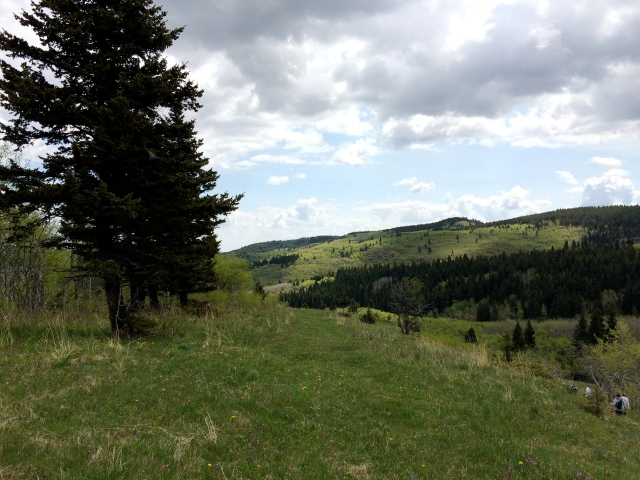 Porcupine Hills