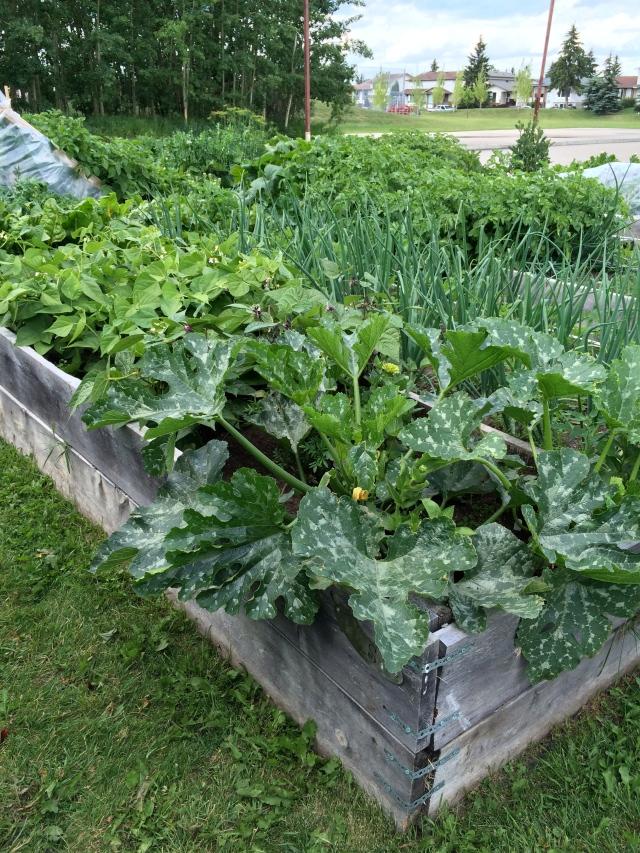 Cedarbrae Community Garden