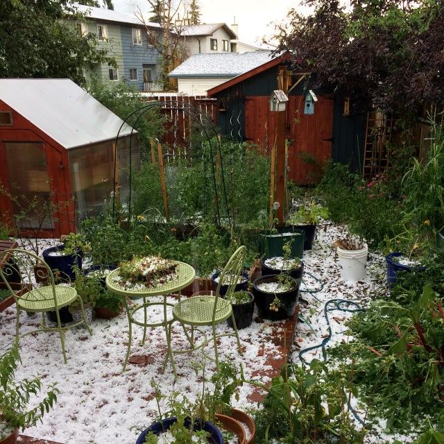 Hail Storm August 2015